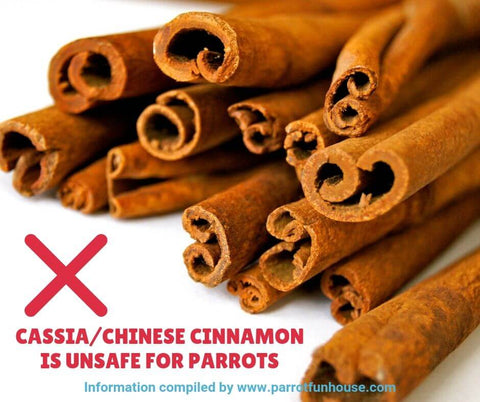 Cassia Chinese cinnamon unsafe for parrots
