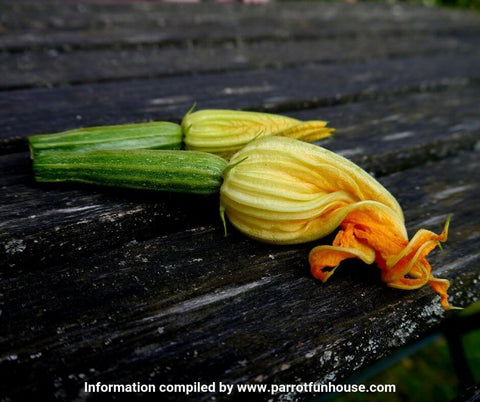 Courgette zucchini flower safe for parrots