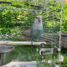Load image into Gallery viewer, Lovebird perching in BIRDKIN Travel Carrier for Small Parrots Parrot Funhouse