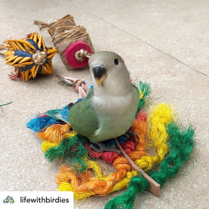 Lovebird chewing Rainbow sisal Preening Toy Parrot Funhouse