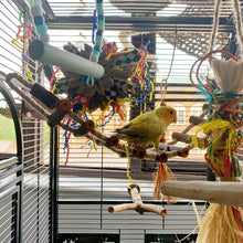 Load image into Gallery viewer, Lovebird playing on Sisal Log Bridge 50x8cm Parrot Funhouse