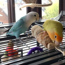 Load image into Gallery viewer, Lovebirds chewing Cactus Wood Bird Kabob Parrot Funhouse