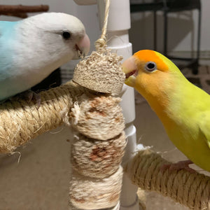 Lovebirds chewing Cactus Wood Bird Kabob Parrot Funhouse