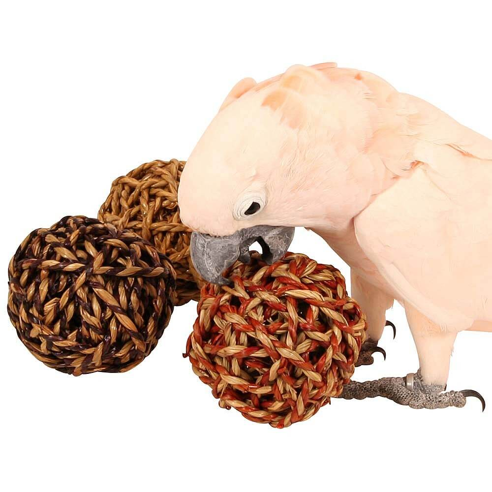 Cockatoo chewing Jumbo Seagrass and Vine ball 10x10cm Parrot Funhouse