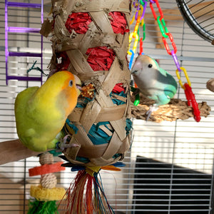 Peachfaced lovebird playing with Boredom Breaker Large Foraging Cylinder Parrot Funhouse