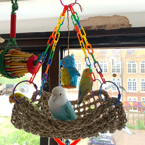 Peach faced lovebird on Party sized big seagrass hammock Parrot Funhouse