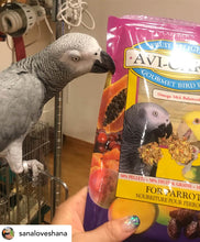 Load image into Gallery viewer, African Grey Parrot eating Lafeber Fruit Delight AviCakes Parrot Funhouse