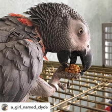 Load image into Gallery viewer, African Grey Parrot eating Lafeber Tropical Nutriberries Parrot Funhouse