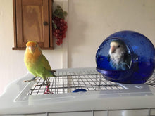 Load image into Gallery viewer, Vision Bird Bath for small parrots
