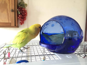 Vision Bird Bath for small parrots