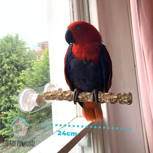 Female Eclectus parrot perching on natural wood window perch Parrot Funhouse