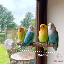 Load image into Gallery viewer, Four lovebirds perching on Natural wood Window Perch Parrot Funhouse