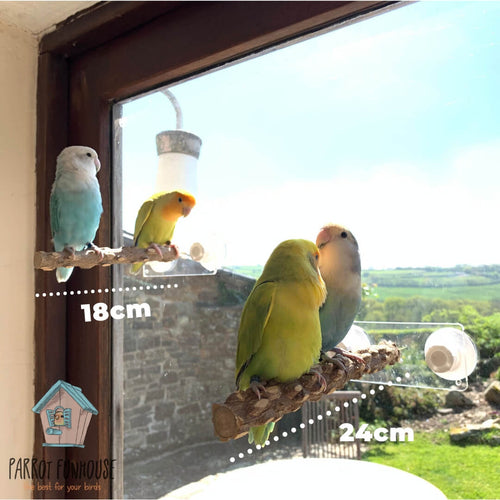 Four lovebirds perching on Natural wood Window Perch Parrot Funhouse