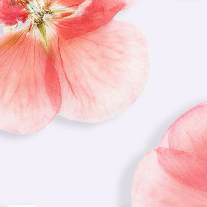 The reasons why organic cosmetic users love Geranium Essential Oil for skincare