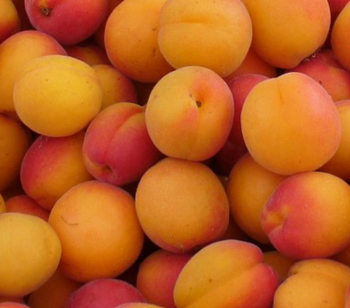 Why is Apricot Oil good for your skin and hair?