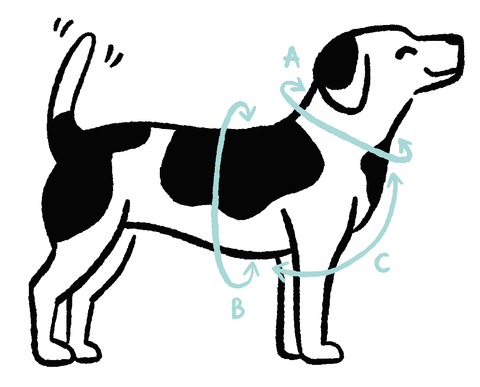 dog harness size guide