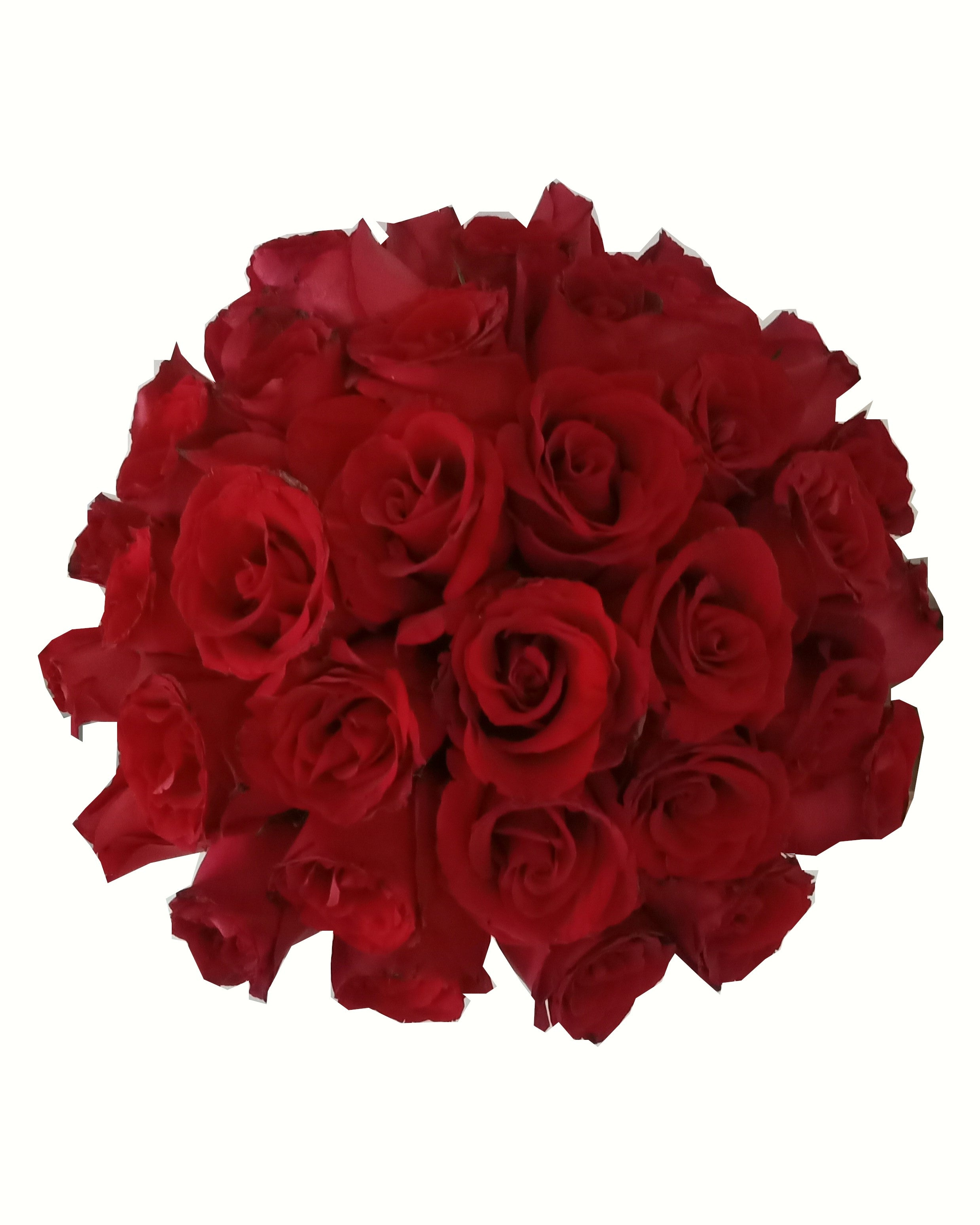 Red Roses Bloom Box, Singapore Florist