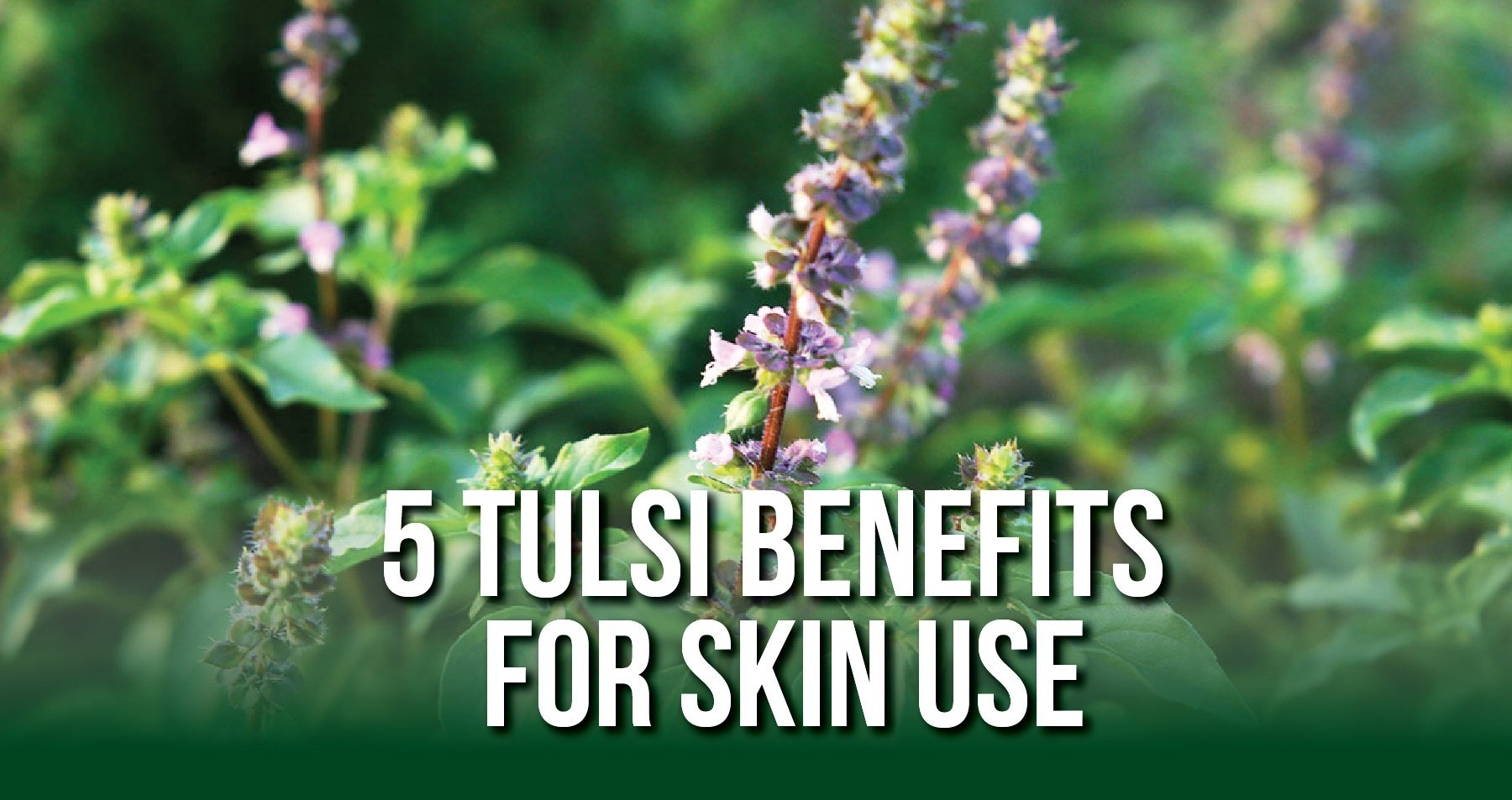 Adaptogenic Tulsi Skin Benefits | iHeart Nature