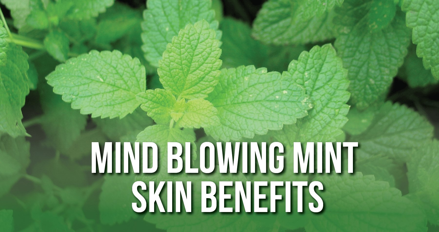 Mind Blowing Mint Skin Benefits | iHeart Nature