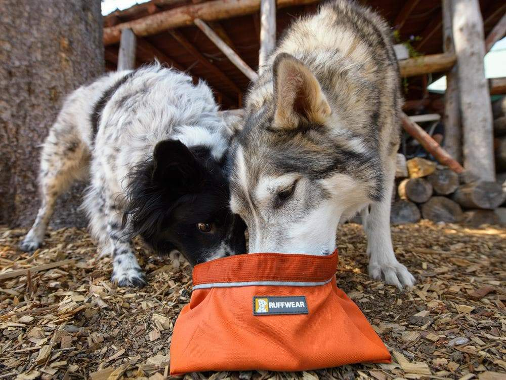 Faltnapf Quencher™ - punpkin orange-Ruffwear-athleticdog