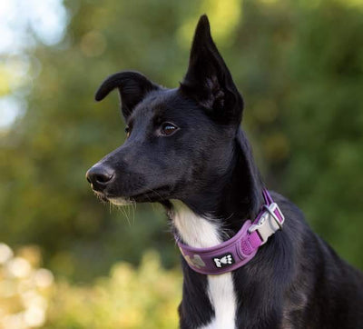 Halsband Weekend Warrior - violett-Hurtta-athleticdog