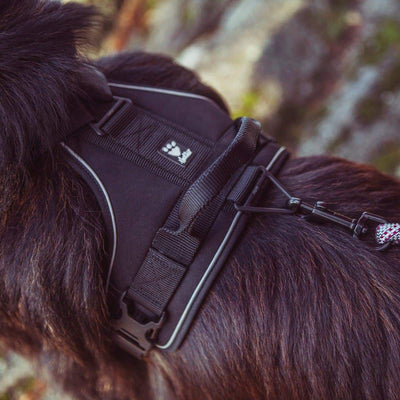 Hundegeschirr Active Harness - schwarz-Hurtta-athleticdog