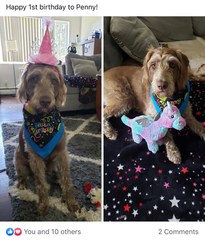 Look who celebrated their 1st birthday!