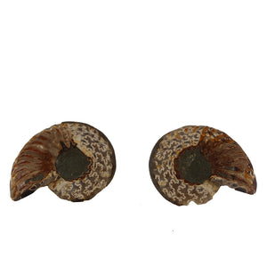 Sea Ammonite Fossil Set from the Jurassic Period - Light