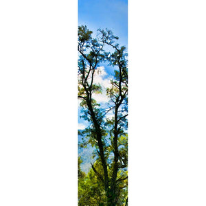 Redbud Spring by Alison Thomas of Serenity Scenes Photography and Digital Art.  A vibrant redbud tree flourishes in the woods, its branches full with fuchsia blossoms and tipped with clusters of small green leaves.