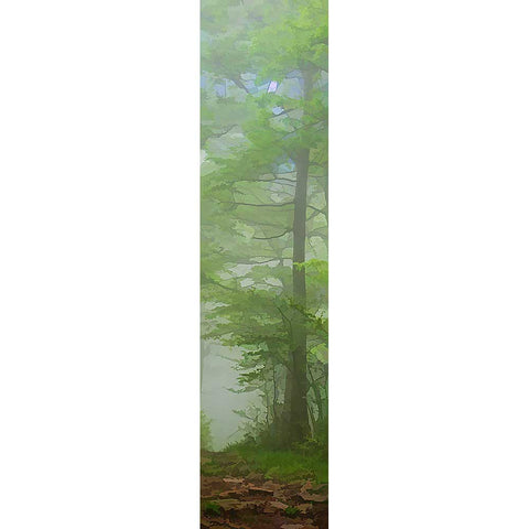 A Walk in the Fog by Alison Thomas of Serenity Scenes Photography and Digital Art.