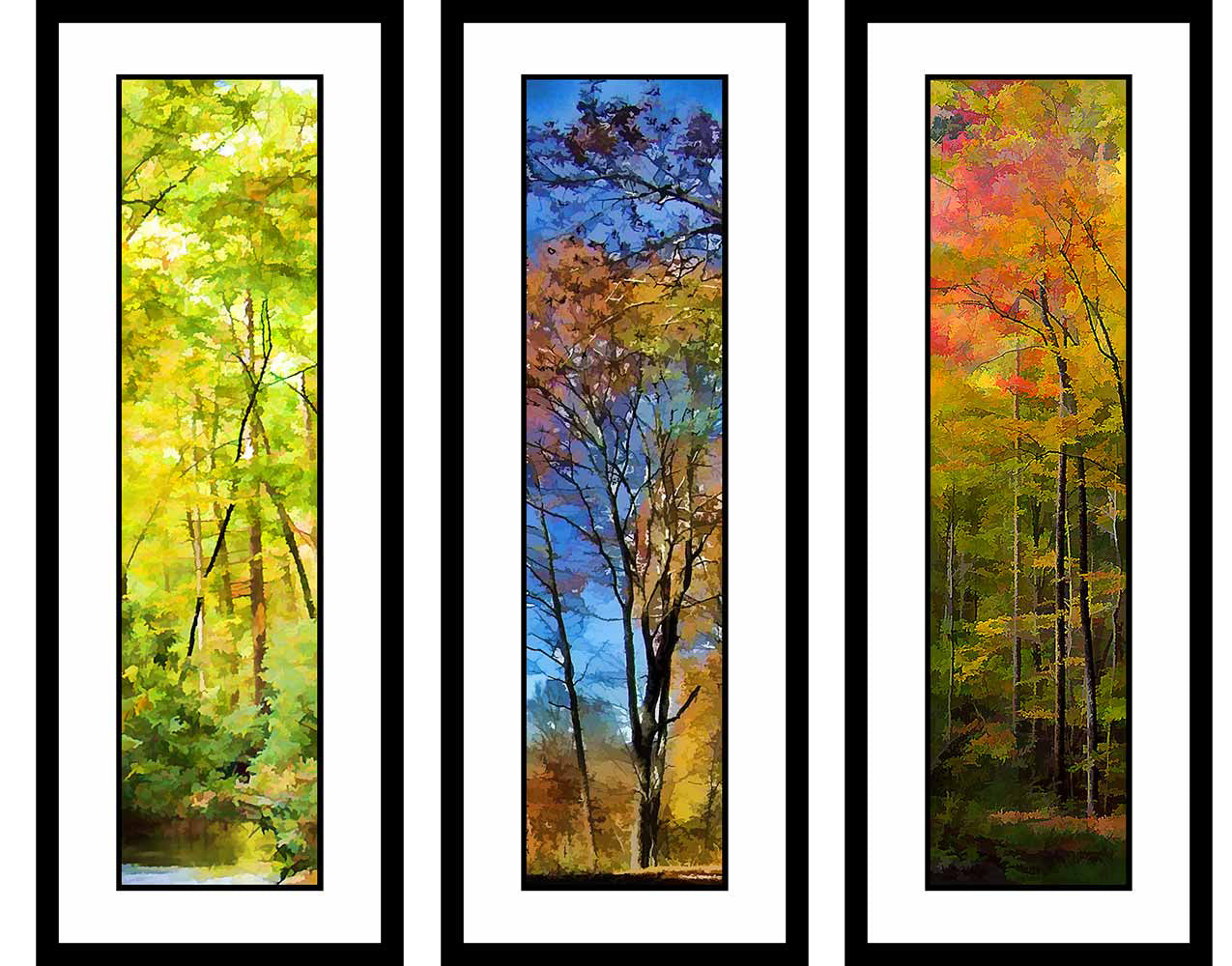 Abstract Fall grouping by Alison Thomas of Serenity Scenes Photography and Digital Art.