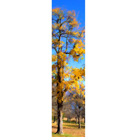 It's the end of autumn, and all the trees in the field have lost their leaves but one. A brilliant blue sky makes the yellow leaves that still cling to the tree even brighter.   Blue Sky Yellow by Alison Thomas of Serenity Scenes Photography and Digital Art.