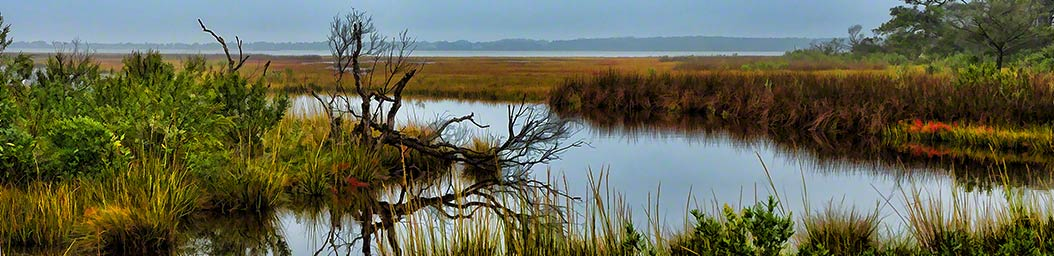Coastal Branch by Alison Thomas of Serenity Scenes Photography and Digital Art.