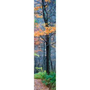 The last orange leaves of autumn in a dense, dark forest. Fog lingers between the nearly bare trees, and a path beckons. Color in the Fog by Alison Thomas of Serenity Scenes Photography and Digital Art.