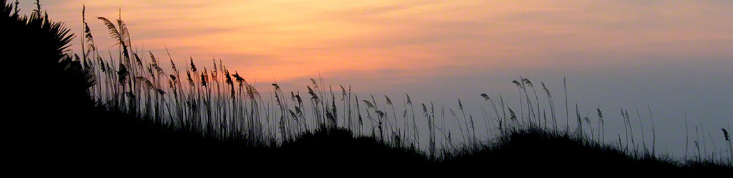 Sea oats on a hillside turn to dark silhouettes at sunrise. Soft lines of purple, pink, and yellow color the sky.  Dune Grass Sunrise by Alison Thomas of Serenity Scenes Photography and Digital Art.