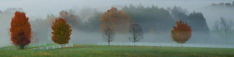Trees emerge from white fog where a fenced-in field meets the forest, some bare, others arrayed in full autumn foliage, bursting with orange, green, and red. The fog weaves through the forest, veiling some trees in a thin mist, and masking others completely.  Fall Fog by Alison Thomas of Serenity Scenes Photography and Digital Art.