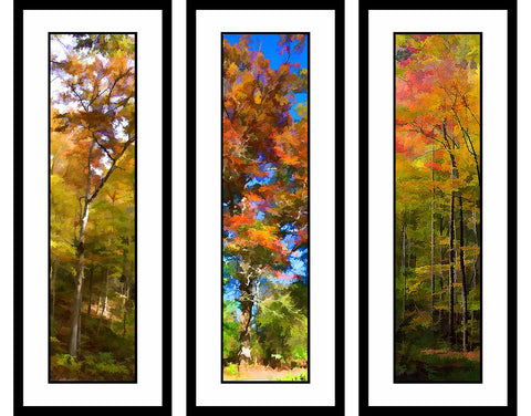 Fall Oranges grouping by Alison Thomas of Serenity Scenes Photography and Digital Art.