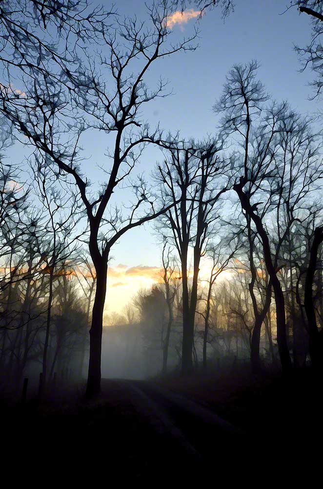 A quiet road on a quiet morning passes through a fog enveloped forest at sunrise.  Fog at Sunrise by Alison Thomas of Serenity Scenes Photography and Digital Art.