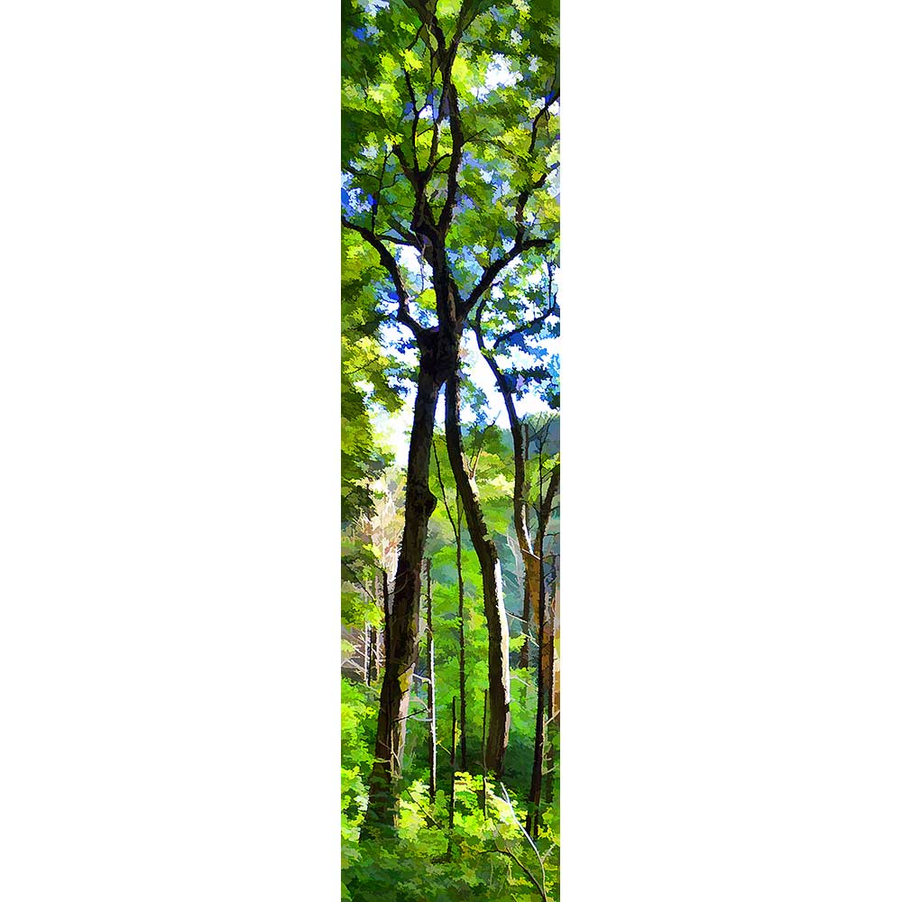 Two tall trees lean together, so that their their highest branches intertwine, separate and interconnected all at once. Sunlight suffuses the scene, green summer leaves on all the trees.  Intertwined by Alison Thomas of Serenity Scenes Photography and Digital Art.