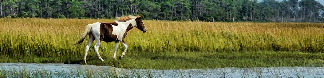 A brown-and-white spotted pony walks peacefully beside a stream in a field of tall grass, its mane and tail caught in a light breeze. Island Pony by Alison Thomas of Serenity Scenes Photography and Digital Art.