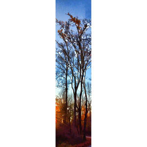 The last orange leaves of fall cling to the topmost branches of tall, slender trees. The stark light of sunrise shines low in the sky and points to the path beside the trees, leading deeper into the forest.   Last Leaves by Alison Thomas of Serenity Scenes Photography and Digital Art.