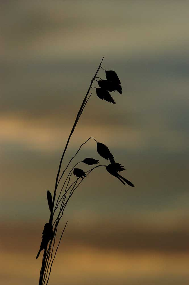 A small branch silhouetted against the changing colors of sunrise.  Leaves and Sunrise by Alison Thomas of Serenity Scenes Photography and Digital Art.