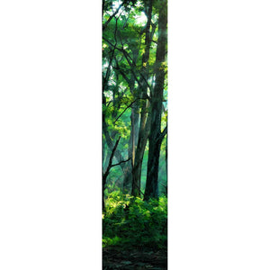 A hint of fog lingers in a still forest soaked in the rich greens of summer, tinging the distance slightly blue. Sunlight cuts through the high branches, casting sharp shadows on the forest floor.   Lifting Fog by Alison Thomas of Serenity Scenes Photography and Digital Art.