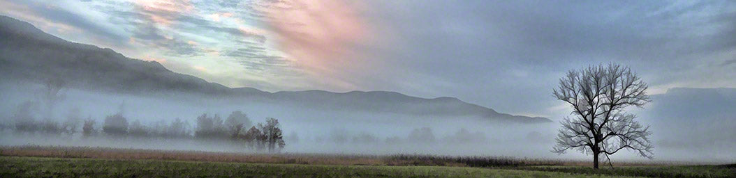 Mist lays across a field, obscuring the mountains behind it. A single bare tree stands out agains the white mist. The sunrise paints the cloudy sky above shades of pink and blue.  Lone Tree Sunrise by Alison Thomas of Serenity Scenes Photography and Digital Art.