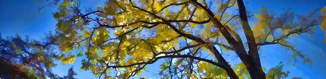 We need to look all around, including up, to see beauty. Yellow leaves on a tall tree shine in the light of a bright autumn day and stand out against the bright blue sky.  Looking Up by Alison Thomas of Serenity Scenes Photography and Digital Art.