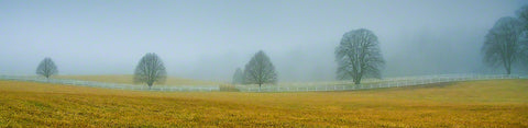 Five bare trees stand in a field of yellow crossed with a white fence. Fog obscures the distance in a gray haze, so the trees appear completely alone.  Misty Morning by Alison Thomas of Serenity Scenes Photography and Digital Art.