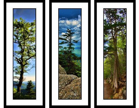 Mountain Trees grouping by Alison Thomas of Serenity Scenes Photography and Digital Art.
