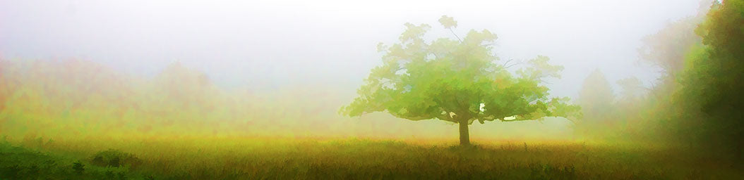 A lone tree nearly obscured by fog.  Shades of light yellw and light green.  You can feel the mist in the air.  Mystic Tree by Alison Thomas of Serenity Scenes Photography and Digital Art.