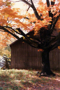 Many different shades of brown in a barn, a fence, and fallen leaves on the ground are accented by the bright orange of an autumn tree.  Orange Tree and Barn by Alison Thomas of Serenity Scenes Photography and Digital Art.