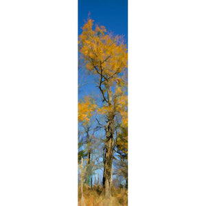 The soft yellow leaves left on an autumn tree look like clouds against the blue sky above. Some of the trees in the background are still green, others bare of leaves entirely.  Puffs in Yellow by Alison Thomas of Serenity Scenes Photography and Digital Art.